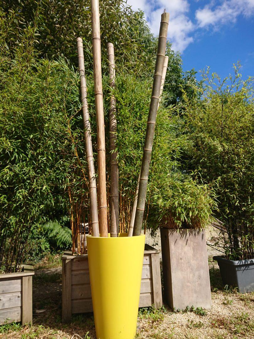 Cannes de Bambou - Produits à la vente