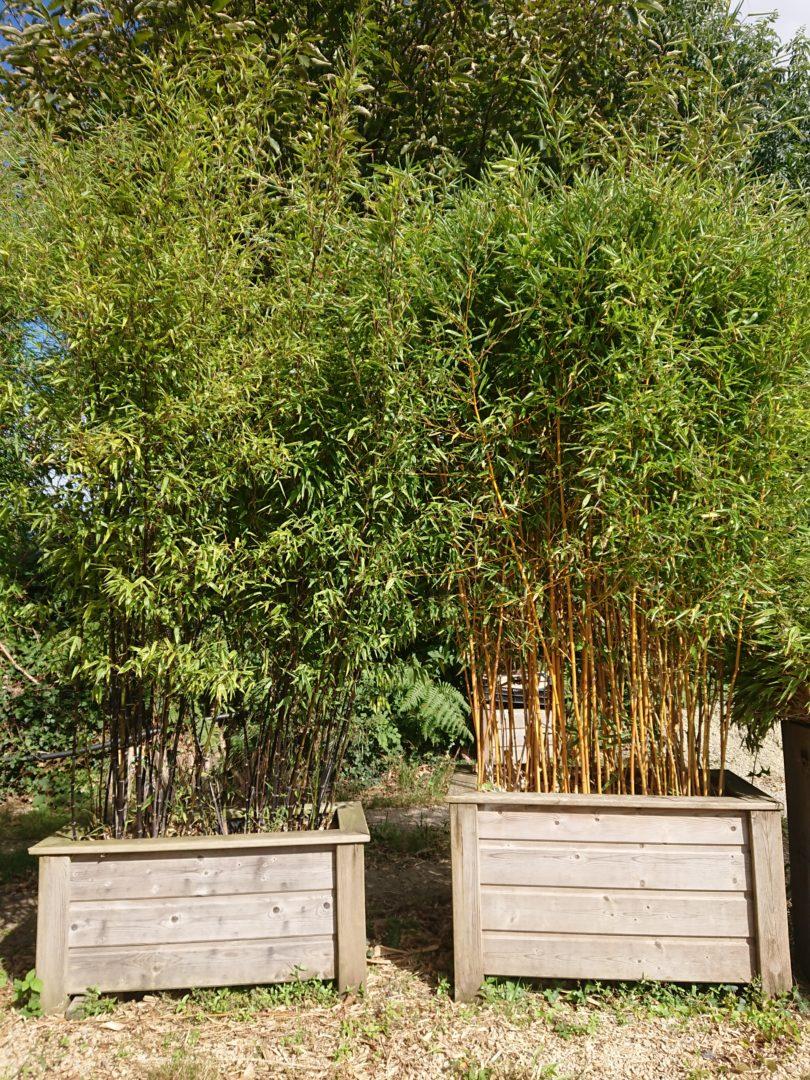 Jardinieres fabriquees a la pepiniere sur mesure bois traite class 4 - Produits à la vente